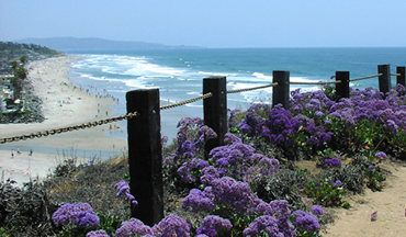 pretty flowers overlooking san diego beach