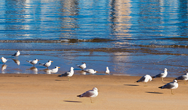 ocean shore with seagulls